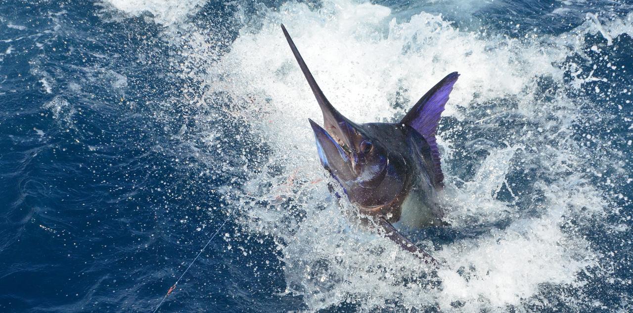 Torneo internacional de pesca