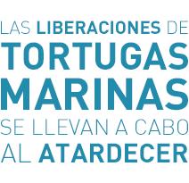 Al Atardecer - Liberaciones de Tortugas Marinas