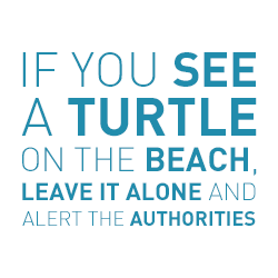 If you see a Turtle Alert the Autorities