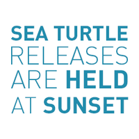 Sea Turtle Releases are held at Sunset