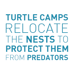 urtle Camp relocate the Nests to Protect Them