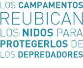 Reubican los Nidos - Liberaciones de Tortugas Marinas