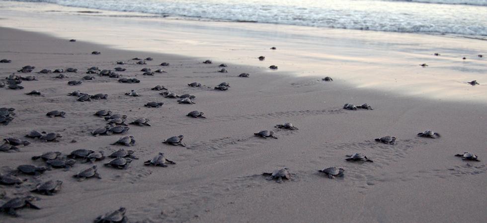 Amazing Sea Turtle Releases