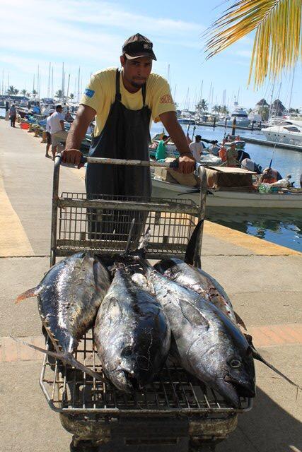 Pescador y su pesca